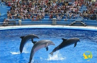 Dolphin Show and Swimming in Sharm el Sheikh