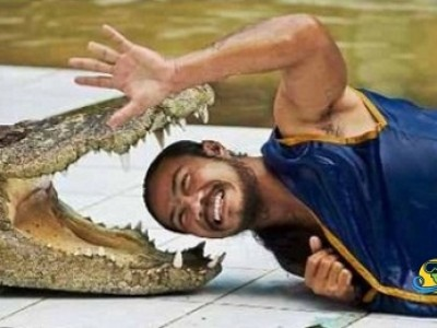 crocodile and snakes show in sharm el-sheikh