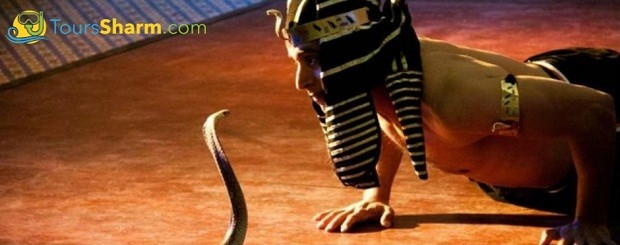 crocodile and snakes show in sharm el sheikh excursion