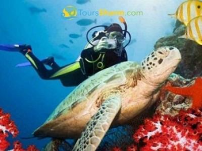 Advanced Scuba Diving Sharm El-Sheikh