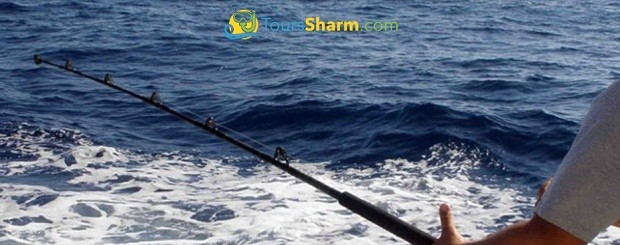 Fishing in Red Sea