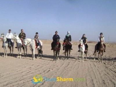 Horse riding in Sharm el-Sheikh desert