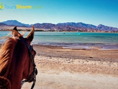 Horse riding on the beach in sharm el-sheikh