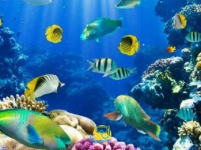 Scuba Diving Sharm El-Sheikh