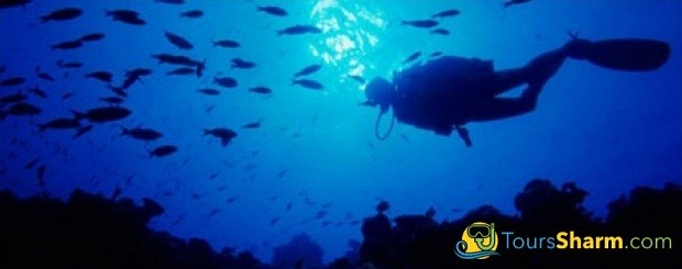 Advanced Scuba Diving Sharm El-Sheikh
